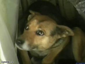 ai2.cdn.turner.com_cnn_2008_WORLD_americas_08_22_argentina.dog.tale_art.argentina.dog.jpg